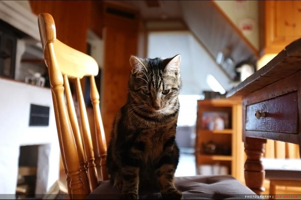 Fuji-X100-00122-Ulf-Greger-cat
